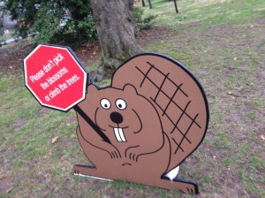 Friendly Tidal Basin Beaver