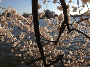 Tidal Basin, Peak Bloom 2014
